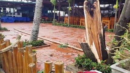 Bão Salas làm tốc mái nhà, quật đổ nhiều cây xanh ở Thanh Hoá