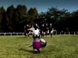 Rayman contre les lapins encore plus cretins le Haka