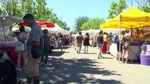 Alpes-de-Haute-Provence : 40 000 visiteurs pour la Fête de la lavande à Valensole !