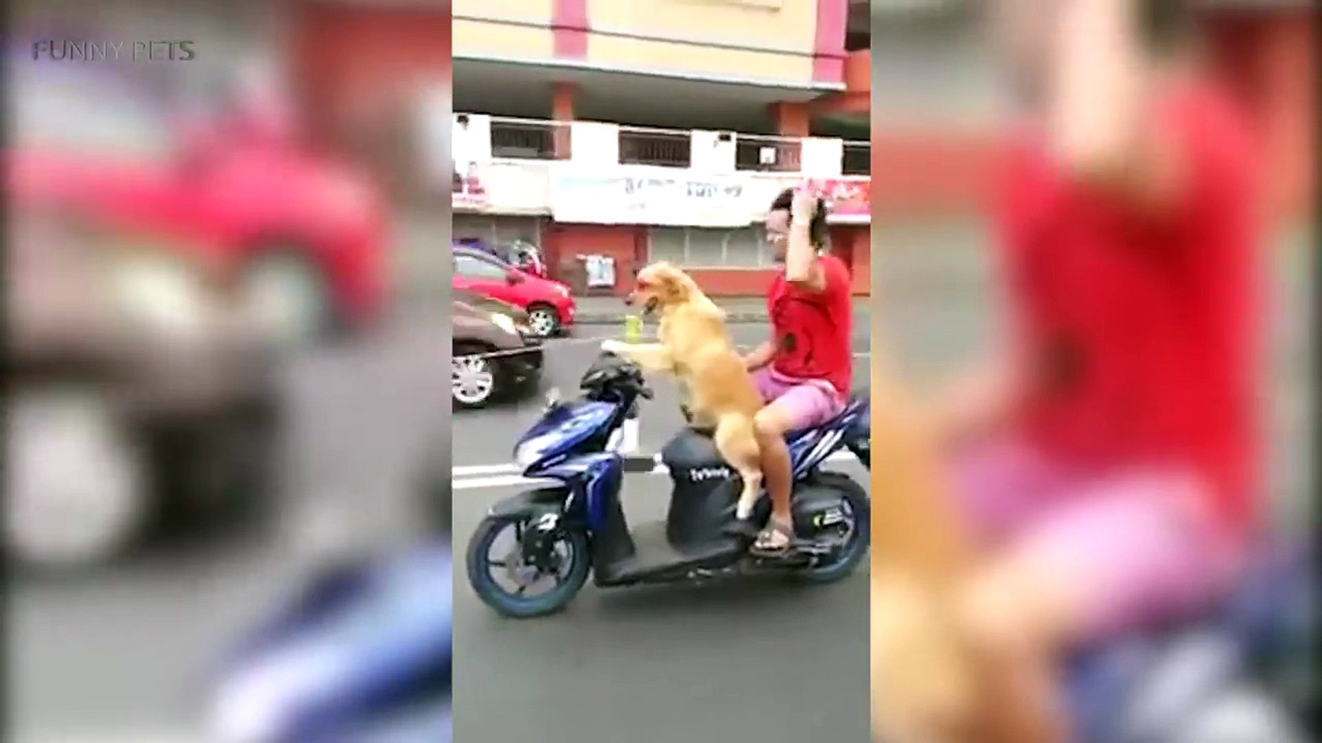 148.PETS RIDING HUMAN TOYS ★ Ultimate Compilation (HD) [Funny Pets]