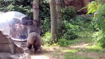 126.Zoo Animals Attacks ★ Zoo Animals Getting Angry! [Funny Pets]