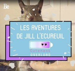 Cuteness Overload : Jill l'écureuil ; )