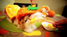 106.Funny Animals in Halloween Costumes ★ PETS in HALLOWEEN COSTUMES [Funny Pets]