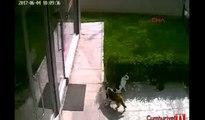 Kediye tekme atan çocuğu uyardı, tekme tokat dayak yedi