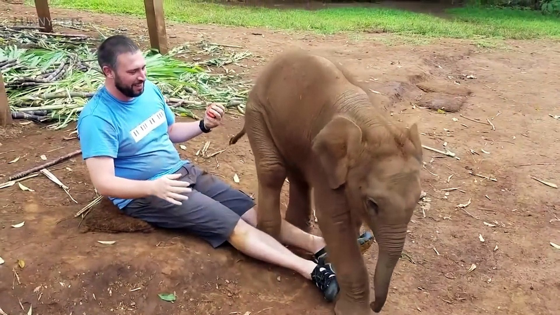 34.Funny Lap Elephants  Cute Baby Elephants [Funny Pets]