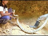 Two Pythons Rescued in Udupi