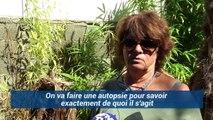 À Saint-Pierre-La-Mer, plus d'une centaine de chats a été empoisonnée…
