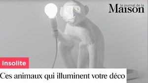 Insolite : ces mystérieux animaux illuminent votre déco !