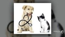 Pets First Wellness Center – Best Pet Clinic with Certified Veterinarians in Bonita Beach, FL