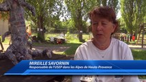 Alpes de Haute-Provence : 190 élèves courent pour la bonne cause à Seyne-les-Alpes
