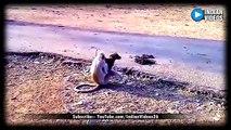 Monkey and Dog Funny Voice Over | Hera Pheri | Monkey as Babu Rao (Presh Rawal) | Dog as Shyam (Sunil Shetty)