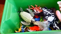 Shark Toys Kids Toy Box Sea Animals Tdfgroy Whales sea turtles care