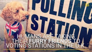 Humans Are Taking Their Furry Friends To Voting Stations In The U.K.