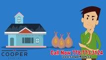 Roof Repair, Roof Maintenance, Roofing Contractors - Cooper Roofing