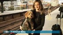 Dans le métro à New-York, les chiens doivent être dans des sacs, ce qui créé de drôles de scènes - Regardez