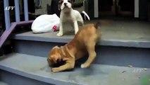 Funny Dog Video compilation # 06 - Funny Animal Vi os
