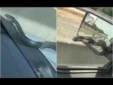 Snake Crawls Up Moving Car On A Highway