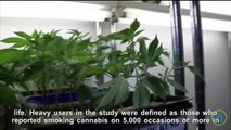 Study Links Heavy Cannabis Use With Bone Disease