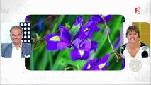 Beauté - L'iris, source de beauté