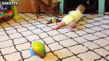 Cute Dogs and Babies Crawling Together - Adorable babies Compi