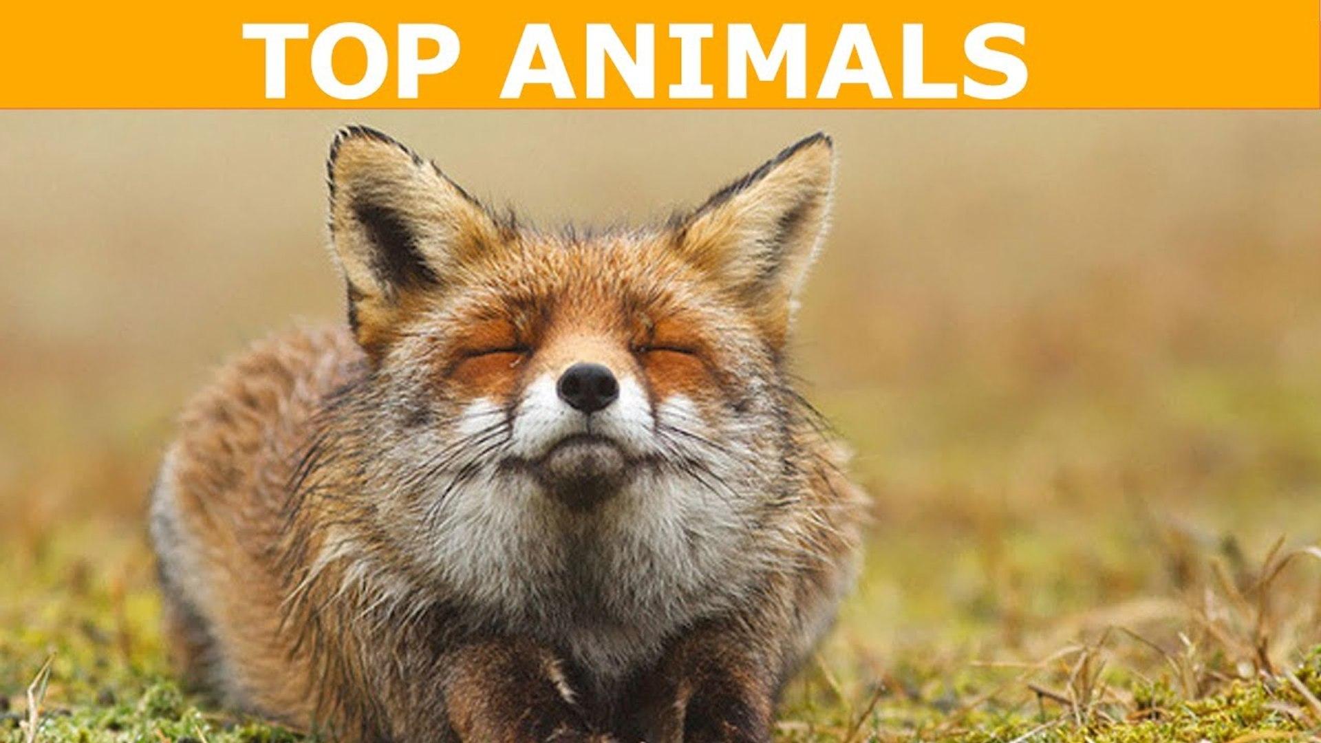 TOP 10 loài động vật đẹp nhất thế giới - Top Animal