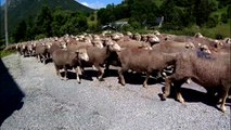 Le pen, Macron et nous les moutons!Par Marco Paolo