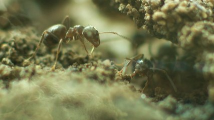 Breaking the code of the ants nest