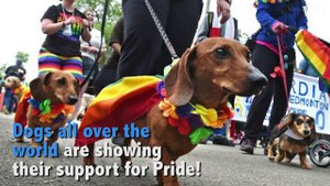 Dogs Celebrating Pride 2017