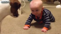 Cute Dogs and Babies Crawling Together - Adorable babies Compilation-IEEo5pIKeY0