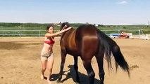Ce cheval vraiment très cool se montre d'une patience exemplaire face à une cavalière vraiment très empotée qui tente de le monter à cru