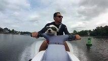 Dog Rides Jet Ski - Jet Ski Westie