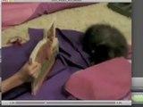 Cat vs Cat Book (2008)ewrwer