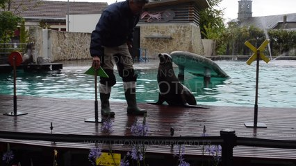 Otaries zoo amiens