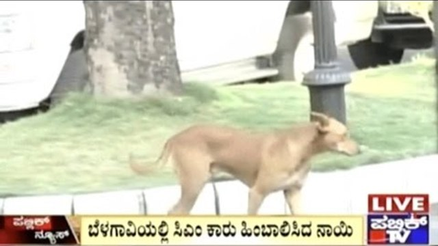 A Dog Follows CM's Car