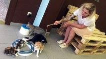 Un bar à chats ouvre ses portes à Mouscron