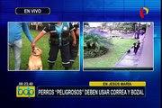 """Jesús María: perros considerados de raza """"peligrosa"""" deben usar correa y bozal"""