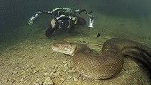 Monstres Marins HD - Plongée avec l'Anaconda (2014)