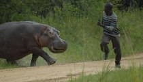 Monstres Marins HD - Plongée avec l'Hippopotame (2014)