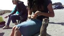 Chipmunks droles qui adorent manger des cacahuetes aux USA - HD