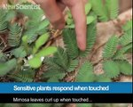 284.Sensitive plants respond when touched