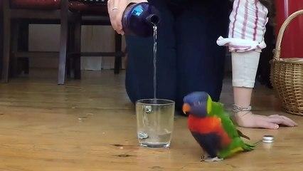 Funny Parrots 2017 Fun Parrot Tricks [Ep