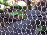 241.Lyrebird mimics construction sounds
