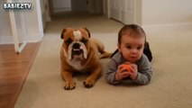 Cute Dogs and Babies Crawling Together - Adorable babies