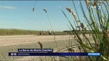 La Ligue pour la Protection des Oiseaux réhabilite un marais salant à La Barre-de-Monts