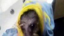 A mi Perro no le gusta bañarse