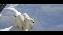 2out Polar Bears for Kids - Polar Bears for Children -