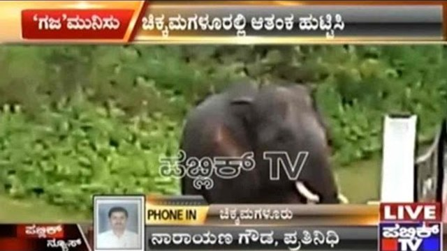 Chikmagalur: Wild Lone Elephant Enters School