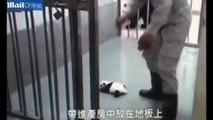 Mon cœur a fondu quand j'ai vu la réaction de cette maman Panda avec son bébé !