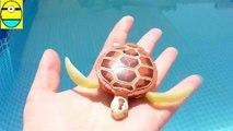 Toys review toys unboxing. Robo turtle. Turtle robot rofofish unboxing toys egg surp