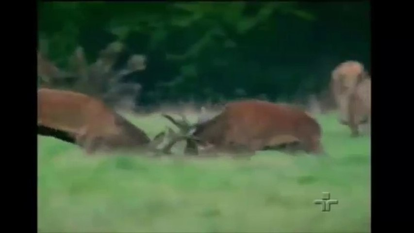 O Reino da Floresta - Vida Animal - Documentário